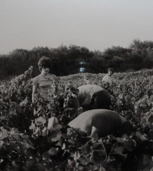 Picking 1973